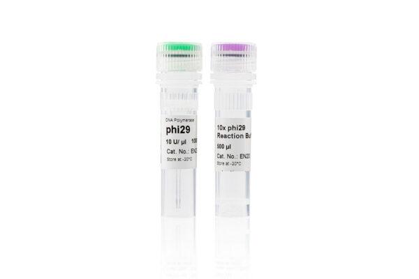 Polymeraza DNA Phi29